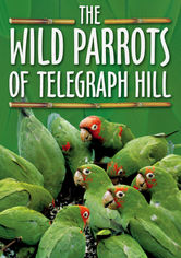 Rent The Wild Parrots of Telegraph Hill on DVD