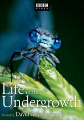 Rent Life in the Undergrowth on DVD