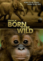 Rent Born to Be Wild: IMAX on DVD