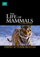 Rent The Life of Mammals on DVD