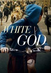 Rent White God on DVD